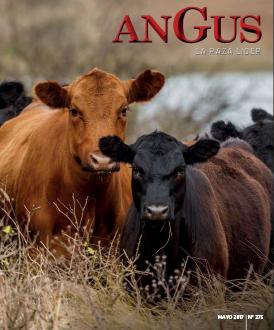 Revista Angus Nº 275